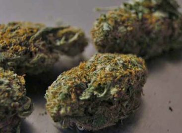 Buying Weed Online – 3 Types of Weed Strains to Go For