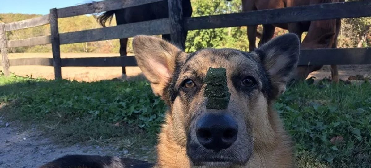 Hemp Oil for Dogs: Is It Safe and Effective?