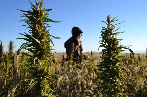 Industrial Hemp – The Crop for the Future