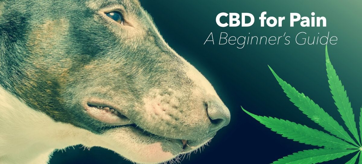 A Guide to Giving Hemp CBD to Dogs