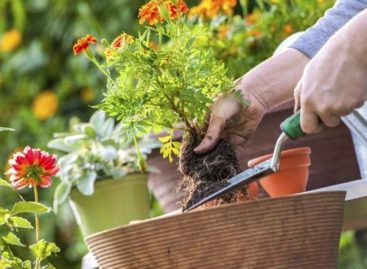 6 Ways to Keep Your Home Horticulture Healthy