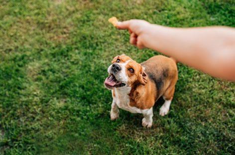 CBD treats your pet would love