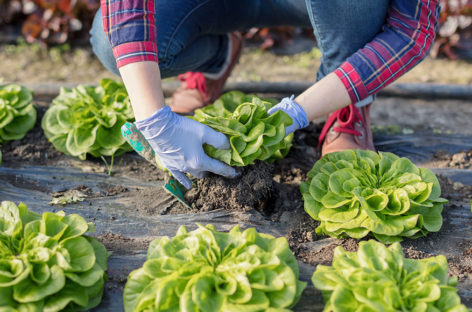 These Easy Gardening Tips Ensure Perfect Germination and Cloning